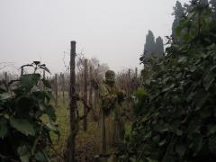 Торчелло, виноградник со скульптурами